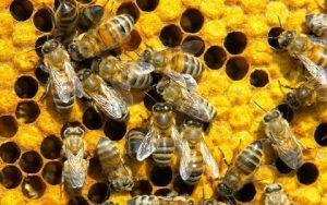 Lợi ích của mật ong với sức khỏe